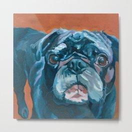 Sir Duke the Pug Portrait Metal Print