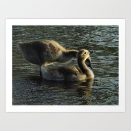 Gosling Pair in River Art Print