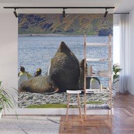 Fur Seal Resting Wall Mural