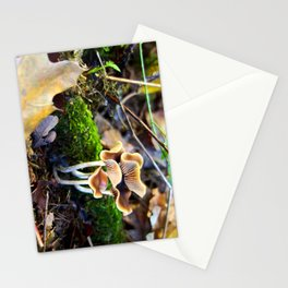 Naturals Stationery Cards