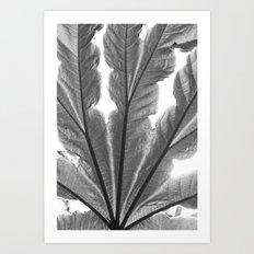 Leaf and sunlight Art Print