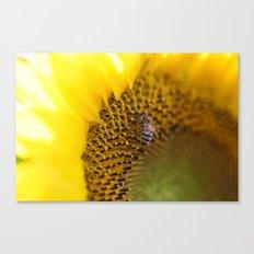 Busy Bee - Sunflower Macro Canvas Print