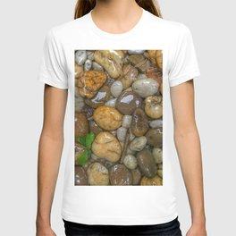 Top View of wet rock backgrounds in the tropical garden in 4:3 Ratio. T-shirt
