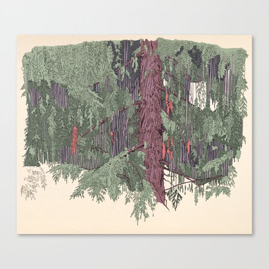 Weeping Cedar Canvas Print