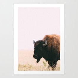 Montana Buffalo Beauty No. 2 Art Print