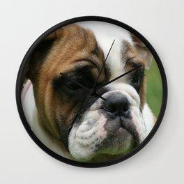 Bull Dog Wall Clock