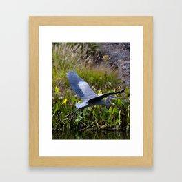 Blue Flyer Framed Art Print
