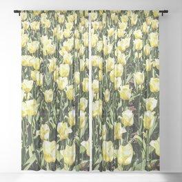 Tulips Sheer Curtain