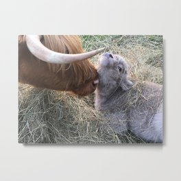 Highland Cow with Calf - Trixie & Ivan Metal Print