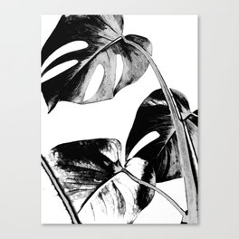 Black monstera leaves watercolor Canvas Print