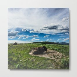 Buffalo, Hayden Valley Yellowstone National Park Metal Print