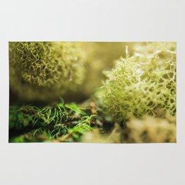 Macro shot of moss Rug