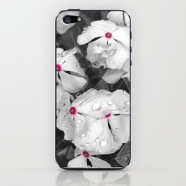 Periwinkles! iPhone Skin