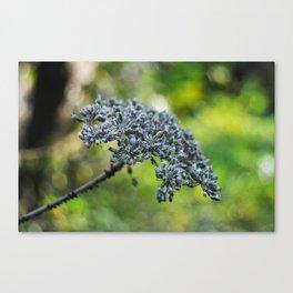 grey flower in autumn Canvas Print