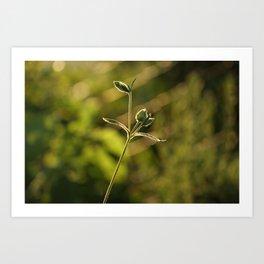Wild garden flower Art Print