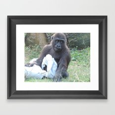Gorilla With Blanket Framed Art Print