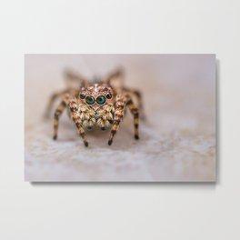 Orange-Brown Jumping Spider Macro Photograph Metal Print