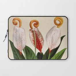 Anthurium scherzerianum old plate Laptop Sleeve