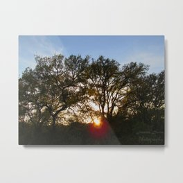 Setting Sun Between the Branches Metal Print