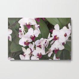 Longwood Gardens Orchid Extravaganza 1 Metal Print