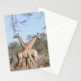 Two Giraffe in the Kruger National Park Stationery Cards