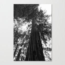 Sequoia National Park V Canvas Print
