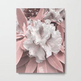 Blushpink azalea in bloom Metal Print