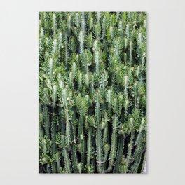 Candelabra Cactus Tree Canvas Print