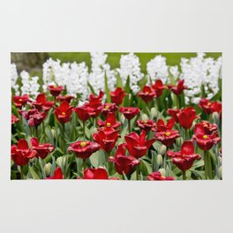 Red Tulip Field with White Hyacinth Flowers Blooming in the Background in Amsterdam, Netherlands Rug