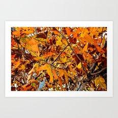 Turning a New Leaf Art Print