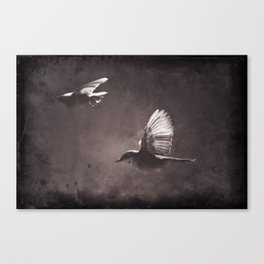 caught on a flight Canvas Print