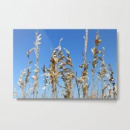 Marsh Grasses Sea Oats Metal Print