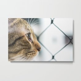 Cat Tax Metal Print