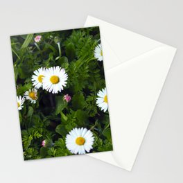 Margaritas-Daisies Stationery Cards