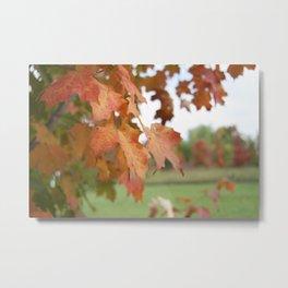 October Leaves Metal Print