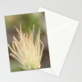 Apache Plume Stationery Cards