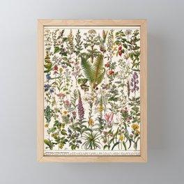 Adolphe Millot - Plantes Medicinales B - French vintage poster Framed Mini Art Print