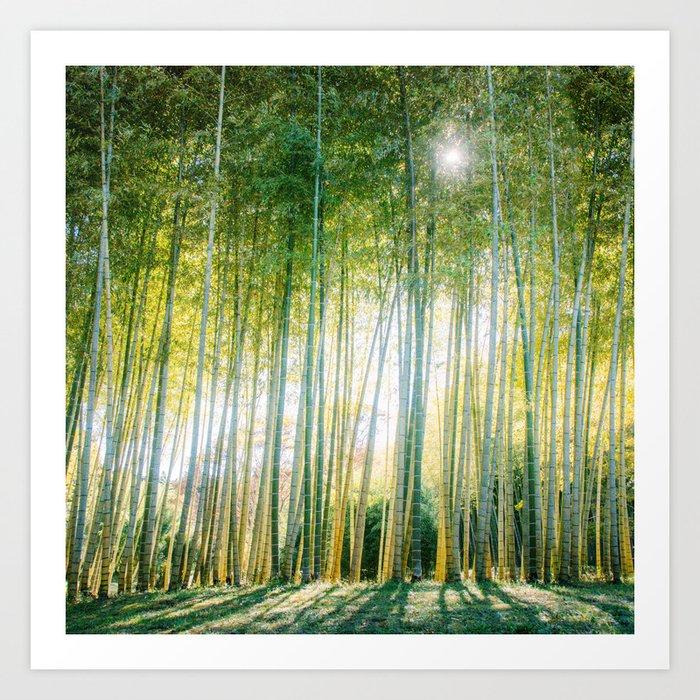 Sunlight Filters through Bamboo Forest Fine Art Print Art Print