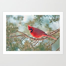 I Spy... (Northern Cardinal) Art Print