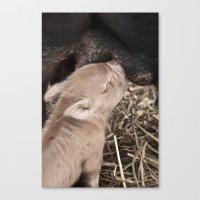 piglet Canvas Prints featuring Piglet by Rachel's Pet Portraits