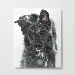 Snow Covered Dog Metal Print