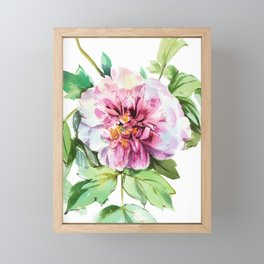 pink tree peony, watercolor, sketch from nature Framed Mini Art Print