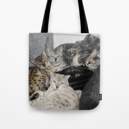Bengal Cat Kitty Pile  Tote Bag