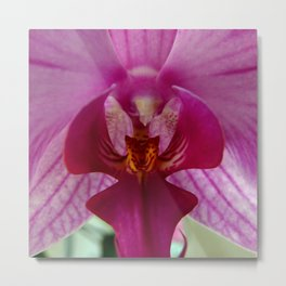 Close up Orchid #1 Metal Print