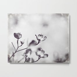 Black and White Floral Dogwood Photography, Grey Spring Flower Tree Branches, Gray Neutral Nature Metal Print
