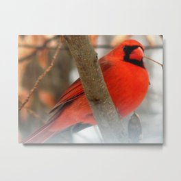 Cardinal on a cold day Metal Print