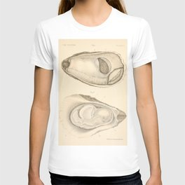 Oyster Anatomy T-shirt