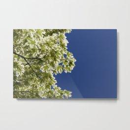 Maple sky Metal Print