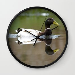 Male Mallard Duck with Brown Head Wall Clock