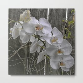 White Moth Orchid Metal Print